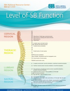 Sb-and-the-spine-938x1214